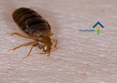 شركة مكافحة حشرة البق بالرياض عمالة فلبينية
