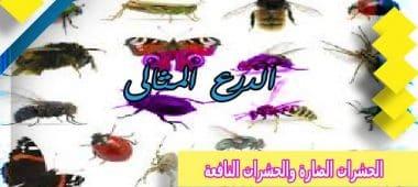 الحشرات الضارة والحشرات النافعة