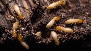 Photo of علاج التربة لمكافحة النمل الابيض