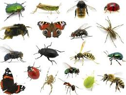 Photo of الحشرات الضارة والحشرات النافعة