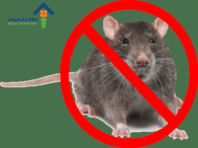 شركة مكافحة الفئران بالرياض عمالة فلبينية
