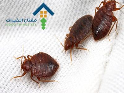 شركة مكافحة البق شمال الرياض عمالة فلبينية