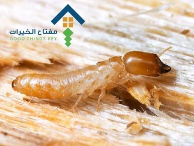 شركة مكافحة النمل الابيض جنوب الرياض عمالة فلبينية