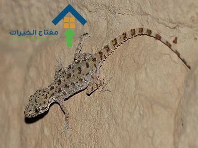 شركة مكافحة البرص شمال الرياض عمالة فلبينية
