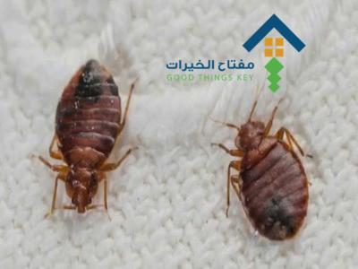 شركة مكافحة بق الفراش جنوب الرياض عمالة فلبينية