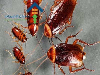 شركة مكافحة الصراصير غرب الرياض عمالة فلبينية