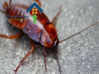 شركة مكافحة حشرات جنوب الرياض عمالة فلبينية