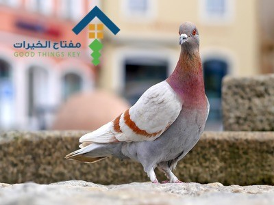 شركة مكافحة الحمام شمال الرياض عمالة فلبينية