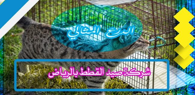 شركة صيد القطط بالرياض 0552272331