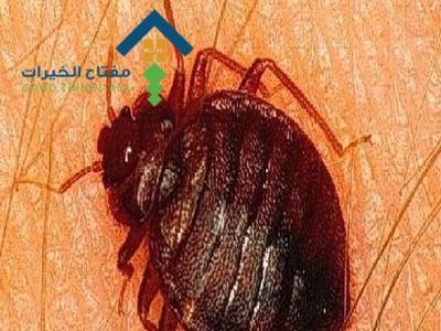 شركة مكافحة البق جنوب الرياض عمالة فلبينية