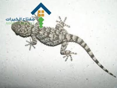 شركة مكافحة البرص جنوب الرياض عمالة فلبينية