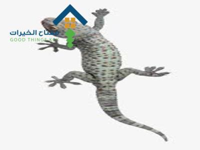 شركة مكافحة البرص شرق الرياض عمالة فلبينية