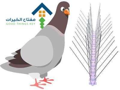 شركة مكافحة الحمام غرب الرياض عمالة فلبينية