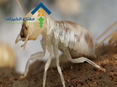 شركة مكافحة الارضة غرب الرياض عمالة فلبينية
