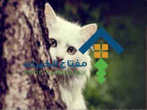 شركة صيد القطط بالرياض عمالة فلبينية