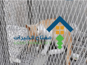 شركة صيد القطط شمال الرياض عمالة فلبينية
