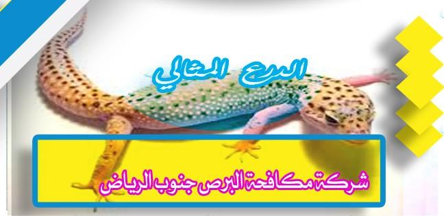 شركة مكافحة البرص جنوب الرياض 920008956
