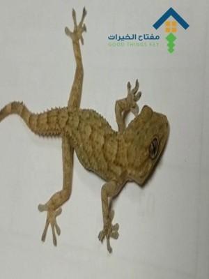 شركة مكافحة البرص غرب الرياض عمالة فلبينية