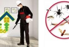 Photo of شركة مكافحة النمل الابيض بالرياض 920008956