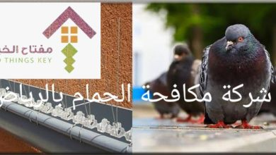 Photo of مكافحة الحمام