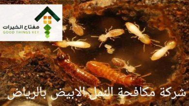 Photo of طرق مكافحة النمل الأبيض