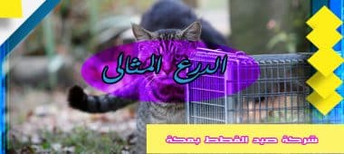 شركة صيد القطط بمكة